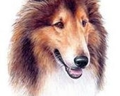 COLLIE SABLE Dog Head on One 16 inch Square Fabric Panel for Quilting and Sewing
