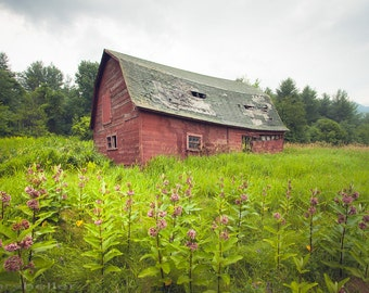 Old Barn and Flowery Field, Red Barn and Rustic Landscape, Color Photograph, Original Signed Print, Farms
