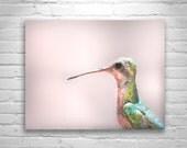 Hummingbird Print, Photo Bird, Wildlife Art, Bird Art, Bird Photography, Cute Birds, Cute Animals, Bird Art, Bird Print, Wall Art Birds