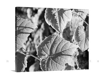 Fine Art Photography, Leaf Art, Nature Photography, Black and White, Canvas Print, Canvas Wrap, Ready to Hang, Forest Art, Gallery Wrap