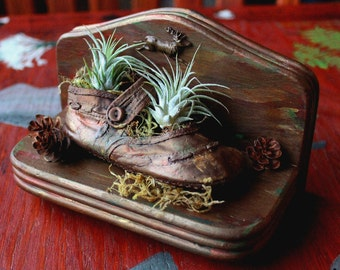 Hand painted vintage baby shoe terrarium planter with Tillandsia air plants, Western hemlock cones, moss