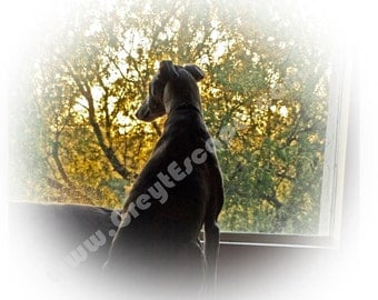 LOST IN THOUGHT, greyhound card, greyhound note card, greyhound stationary, sighthound card, greeting card, 10 pack cards, thank you card