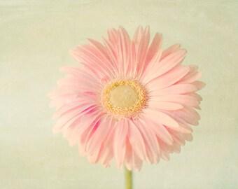 Fine Art Photography - Nature Gerbera Daisy Photo Pastel Landscape Print Pink Pastel Nursery Girls Room Flower Spring Photo Shabby Decor