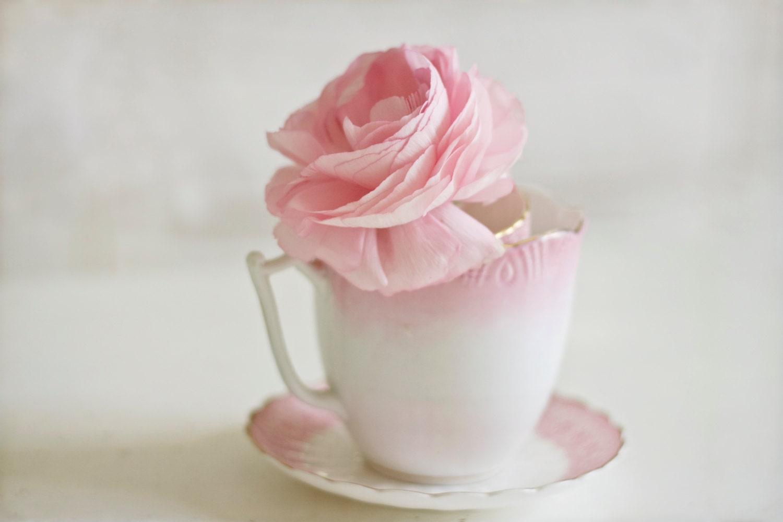 Still Life Photography Flower Rose Pastel Photo Shabby