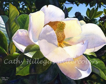 White Magnolia, art watercolor painting print from an original watercolor painting by Cathy HIllegas, white, purple, yellow, blue, green