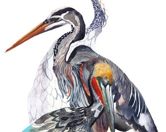 Pelican, Heron, and Crane - Archival Print
