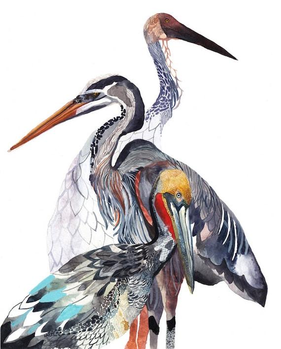 Pelican, Heron, and Crane - Archival Print