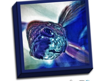 """Beta Fish - Blue Red Teal -  6""""x6"""" to 36""""x36"""" - 1.25"""" Deep - Gallery Wrapped Canvas - artstudio54"""