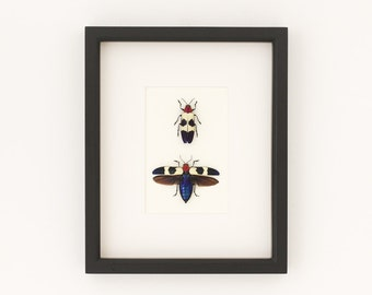 Framed Real Jewel Beetle Collection Display