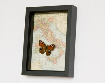 A View of Italy with mounted real butterfly