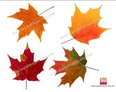 Instant Download - Maple Leaf Cut Outs - DIY You Print - PDF- Favor Tags Place Cards Wishing Trees Decorations etc