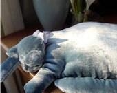 A Pretty Blue Velvet Cat