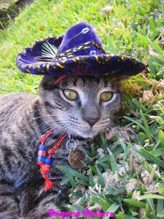 Sombrero for dog or cat - Customizeable Pinata Purple