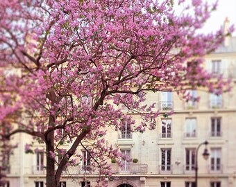 Paris Photography - Spring in Paris, Pink Blossoms, French Home Decor,  Large Wall Art