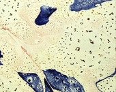 marbled paper, marmorpapier , Bookbinding, papier marbrè , marbled paper . carta marmorizzata cm 50 x 70  -    2512