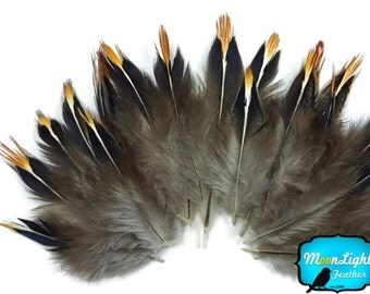 Exotic Feathers, 10 Pieces -  NATURAL Jungle Cock Tip Body Feathers : 3359