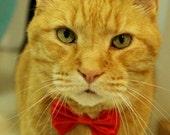 Lipstick Red Cat Break Away  Bow Tie Collar