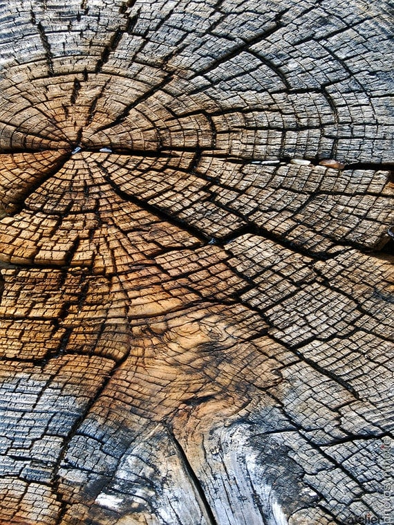 Weathered Woodgrain Natural Abstract Fine Art Photography - Gallery Standard Affordable Limited Edition Artwork - Selectable Size and Finish