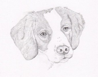 Brittany Spaniel Signed Personalized Original Pencil Drawing Double Matted Print -Free Shipping ...