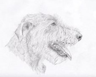 Irish Wolfhound Signed Personalized Original Pencil Drawing Double Matted Print -Free Shipping- Desert Impressions