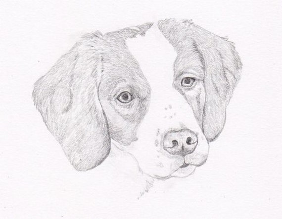 Brittany Spaniel Signed Personalized Original Pencil Drawing