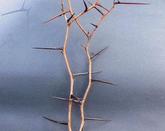 Thorn Sculpture on Driftwood Base # 3