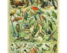 Vintage French Encyclopedia Bird Print Digital Collage Sheet SALE!!! Full Size Page Digital Download Oiseaux #3 Large Image INSTANT Download