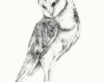 """Barn Owl Print 8"""" x 10"""""""