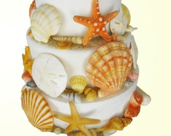 edible sea shells with sand natural color set of 65
