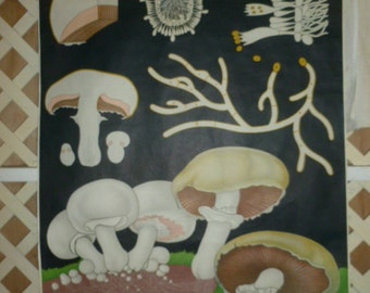 Vintage European Hanging Chart, Mushrooms, Champignon