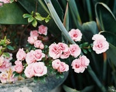 Pink Flowers Photo, Film Photo, Flower Decor, Small Flowers Print, Spring Photograph, Green Leaves, Garden Photograph, Shabby Chic Decor