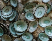 Green Limpet Small Sea Shells Loose Supplies for Arts and Crafts, Home Decor, Collections