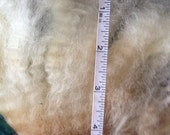 Wensleydale Raw Fleece Spinning Fiber Doll Hair
