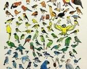 Rainbow Birds Print