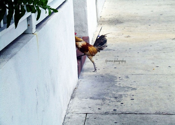 Rooster Art, Key West, Rooster Photography, Duval Street, Key West Rooster, Rooster Print, Key West Art, Rooster Wall Art, Key West Print