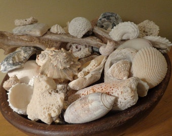 Neptune's Breakfast Bowl, Coral, Cockle, & Conch, MORE Oh MY! in Lovely Grained Vintage Wooden Bowl, Seashells Beach Sea  Bygone Beachcomber
