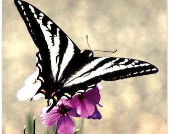 Photograph, butterfly, black and white stripes, purple flower, The Beauty is in the Stripes