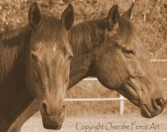Animal Photography Quarter Horses in Sepia Equine Photography Pet Portrait