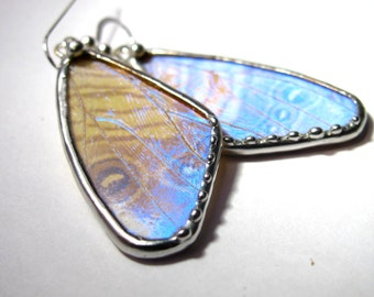 Butterfly earrings / Butterfly jewelry / Real Blue Morpho Butterfly Jewelry / Blue Morpho Earrings / Morpho Sulkowsky