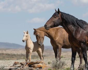 The Wild Family - Fine Art Wild Horse Photograph - Wild Horse Sand Wash Basin - Fine Art Print