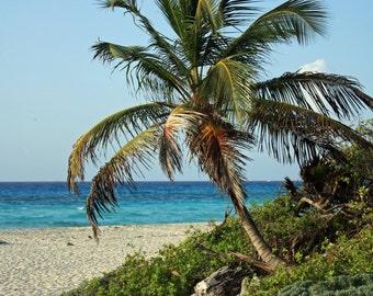 Palm Tree in the Riveria Maya, Mexico