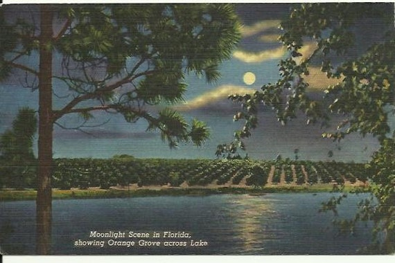 Vintage Linen Postcard - Night Scene - Moonlight Scene in Florida, showing Orange Grove across Lake Curteich 1946
