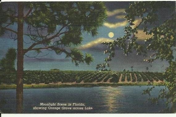 Vintage Linen Postcard - Night Scene - Moonlight Scene in Florida, showing Orange Grove across Lake Curteich 1946