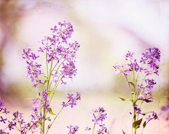 "Purple Floral Photography, spring lavender flower light nature print green nursery wall art large botanical baby girls room, ""Purple Dream"""