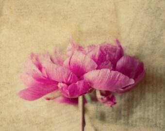 pink peony art, shabby flower art, girls decor, romantic flower print, pink flower art, beige wall art, floral nursery decor, rustic flower