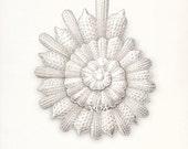 Coastal Decor Ernst Haeckel Sea Shell -Thalamophora Giclee Print 8x10