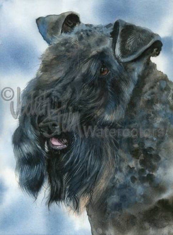 "Kerry Blue Terrier, AKC Terrier, Pet Portrait Dog Art, Giclee Watercolor Painting Print, Wall Art, Home Decor, ""Irish Blue"" by Judith Stein"