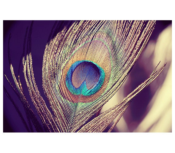 Peacock photograph - peacock fine art print  - surreal - dreamy - peacock - nursery art - wall art - peacock metallic print