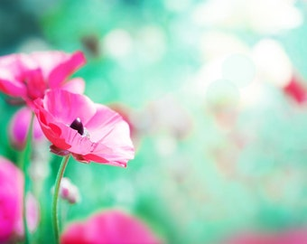 floral art flower art photography botanical art print 8x10 nature art print photography decor photography flowers pink poppies mint aqua
