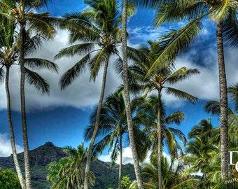"5x7, Digital Print, ""Peaceful Palms"""